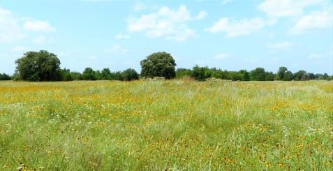 daphne-prairie-near-mt-vernon