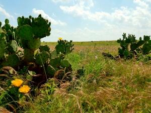 Maddin Prairie Preserve